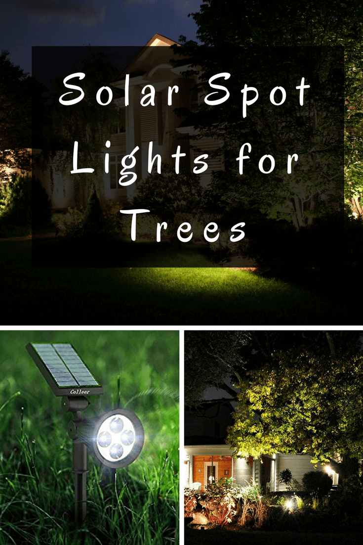 Accent Your Garden Features At Night With Solar Spot